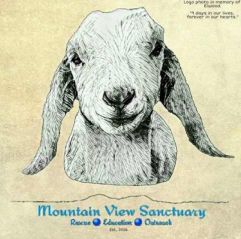 Mountain View Sanctuary